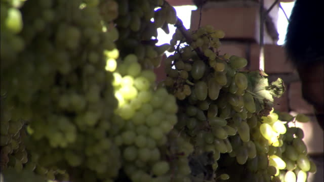 man hangs bunches of grapes on drying rack, turpan, xinjiang province, china - drying rack stock videos and b-roll footage