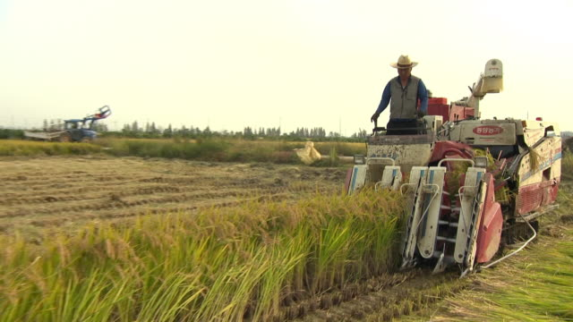 a man harvest crops using by threshing machine - threshing stock videos & royalty-free footage