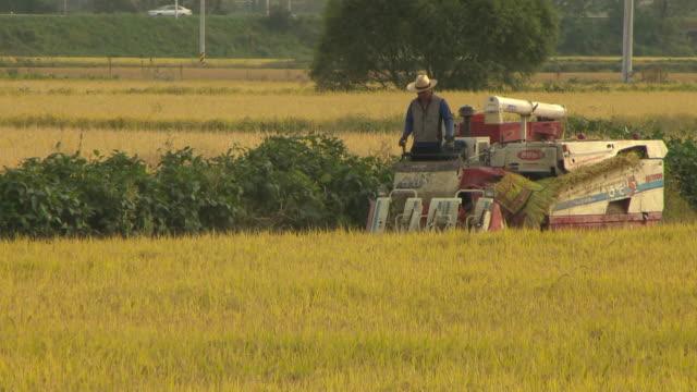 stockvideo's en b-roll-footage met a man harvest crops using by threshing machine - alleen één oudere man
