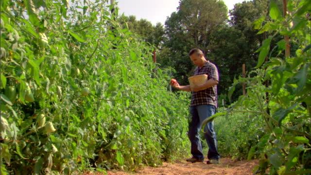 man harvesting produce in garden - この撮影のクリップをもっと見る 1278点の映像素材/bロール