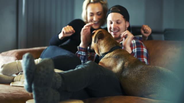 Homme s'amusant avec le chien à la maison