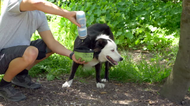 stockvideo's en b-roll-footage met a man helps his dog drink water after running on a trail. - slow motion - alleen één mid volwassen man