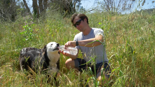 a man helps his dog drink water after running on a trail. - palos verdes stock videos & royalty-free footage
