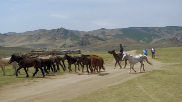 man herder with horses on land by mountains against sky - ulaanbaatar, mongolia - 遊牧民族点の映像素材/bロール