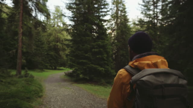 man hiking and exploring forest area - casacca video stock e b–roll