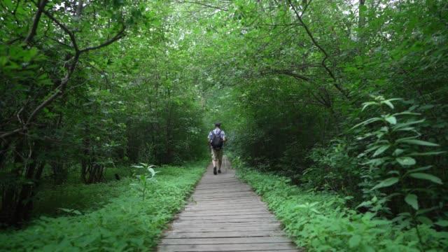 オタワでハイキングする男 - 中年の男性一人点の映像素材/bロール