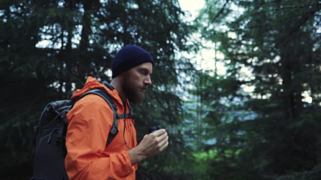 man hiking in the forest of the dolomites, immersed in the nature - wildlife stock videos & royalty-free footage