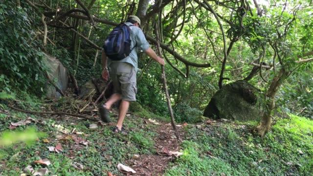 man hiking in the rain forest of rarotonga cook islands - rarotonga stock videos & royalty-free footage