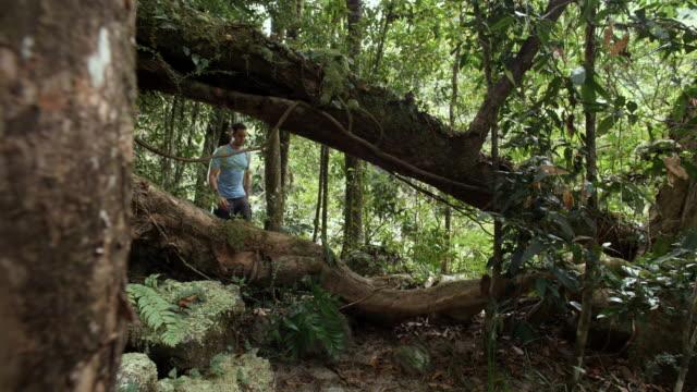 WS, Man hiking in tropical rainforest, Mossman, Queensland, Australia