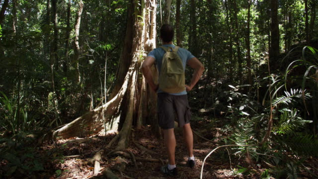 vídeos de stock, filmes e b-roll de ws, tu, man hiking in tropical rainforest, rear view, mossman, queensland, australia - árvore tropical