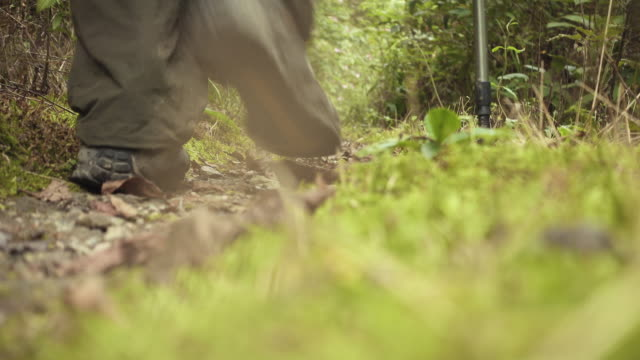 man hiking in woods - one mid adult man only stock videos & royalty-free footage