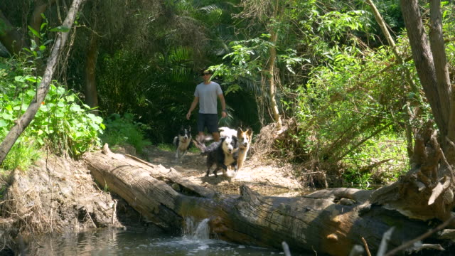 a man hiking with his dogs on a trail. - slow motion - palos verdes stock videos & royalty-free footage
