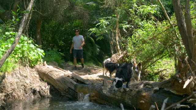 a man hiking with his dogs on a trail. - tre animali video stock e b–roll