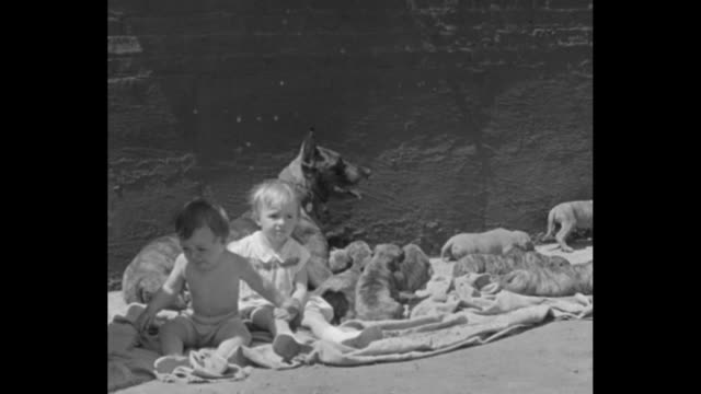 Man holding a baby speaks as dog nurses several puppies little girl manhandles single pups as another elementaryage girl holds one / Note exact year...