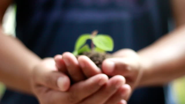 stockvideo's en b-roll-footage met man holding a little green plant - bloem plant