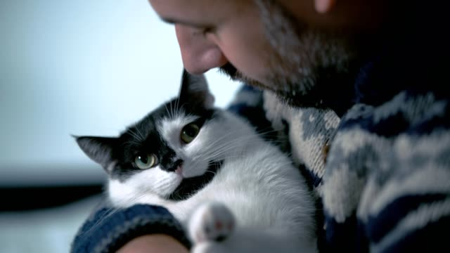 man holding angry cat. trying to pet it - pet owner stock videos & royalty-free footage