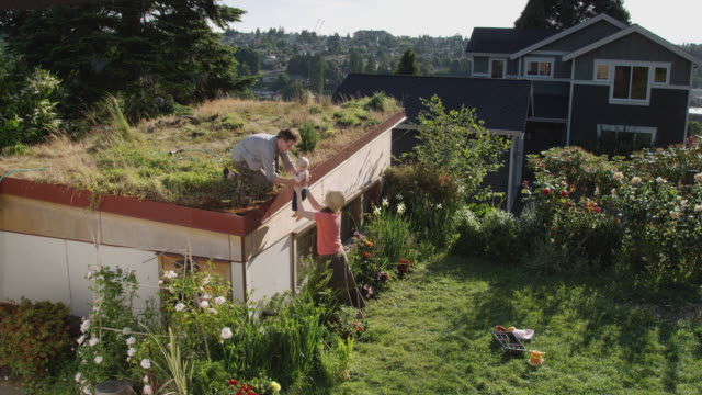 HA WS Man holding baby on green roof hands her down to woman below in garden, then he waters grants on roof / Seattle, Washington, USA
