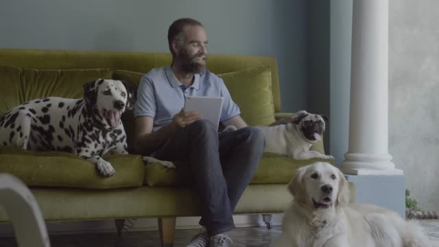 man holding digital tablet while sitting with dogs at home - mid adult men stock videos & royalty-free footage