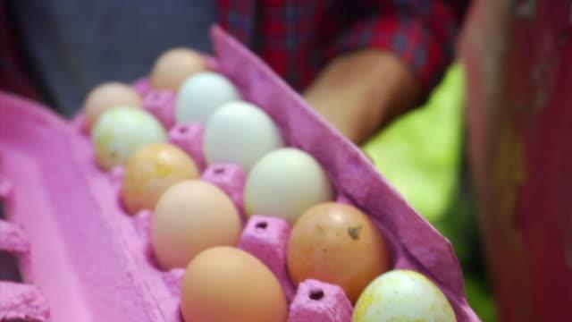vidéos et rushes de cu man holding eggs in carton, bovina center, new york, usa - groupe moyen d'objets