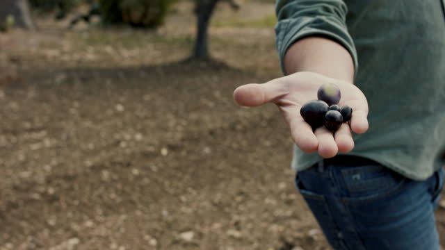 man holding freshly picked olives - five objects stock videos & royalty-free footage