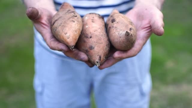 有機サツマイモを手に持っている男 - サツマイモ点の映像素材/bロール