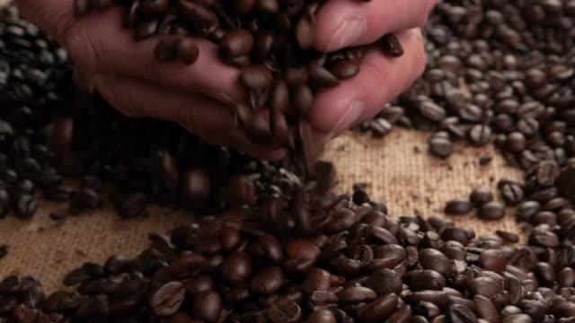 man holding roasted arabica coffee beans - toccare video stock e b–roll