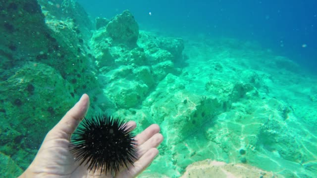 ms man holding sea urchin underwater - ricci di mare video stock e b–roll