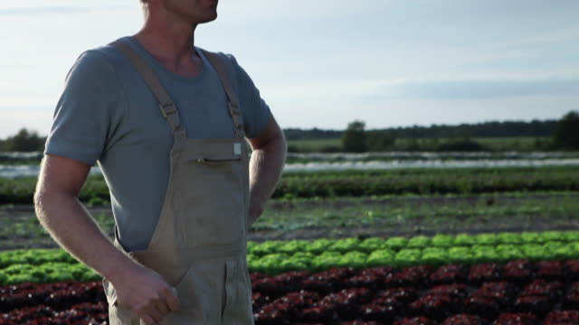 stockvideo's en b-roll-footage met cu tu td man holding shovel standing amongst lettuce on organic farm / brodowin, brandenburg, germany - handen op de heupen