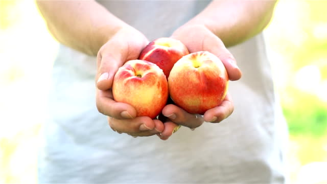 man holds peach in the palms of his hands - slow motion - peach stock videos & royalty-free footage
