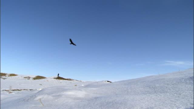 man hunts with eagle on snowy steppes, jiakuerte, china - 猛禽点の映像素材/bロール