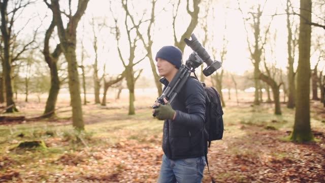 a man in a beanie hat walking around the forest full of bare trees in the fall in london -wide shot - bonnet stock videos & royalty-free footage