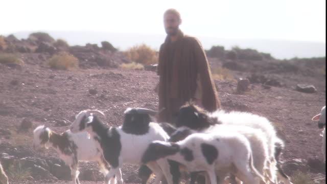 a man in a robe tends a flock of sheep. - 羊飼い点の映像素材/bロール
