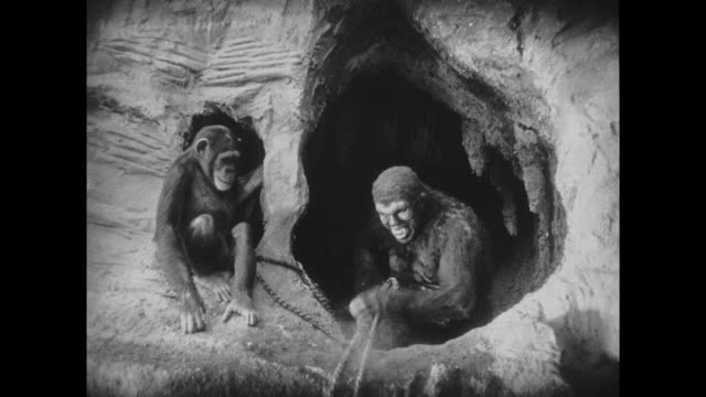 1925 Man in ape suit gets shot by explorer after sabotaging rope ladder rescue