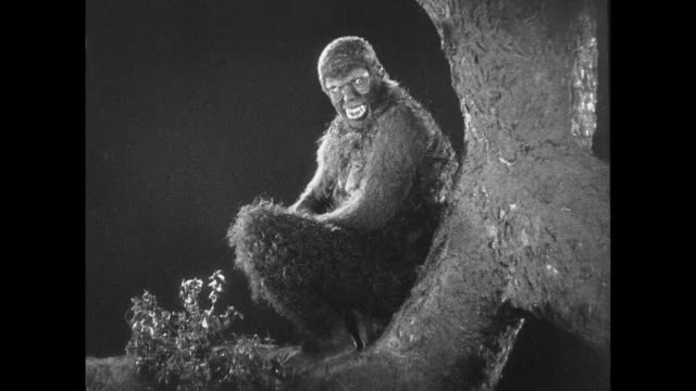 1925 Man in ape suit watches from tree branch