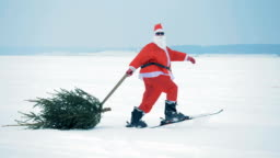 Man in Claus costume pulls a christmas tree while skiing, side view.