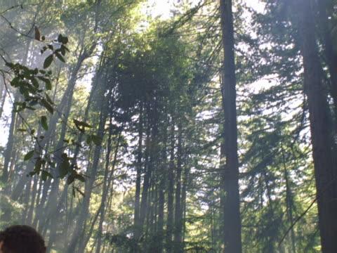 vídeos y material grabado en eventos de stock de man in forest - encuadre de tres cuartos