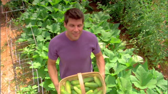 man in garden with basket of cucumbers - see other clips from this shoot 1425 stock videos and b-roll footage