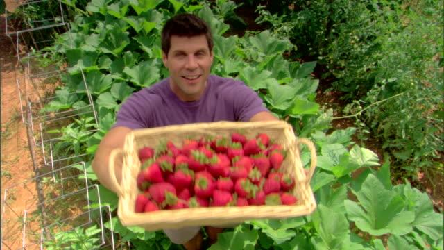 vídeos y material grabado en eventos de stock de man in garden with basket of strawberries - dar