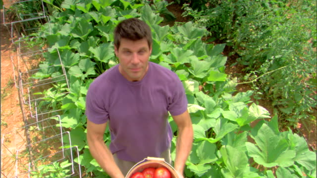 man in garden with basket of tomatoes - see other clips from this shoot 1425 stock videos and b-roll footage