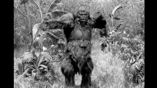 vídeos y material grabado en eventos de stock de man in gorilla costume walks poses in forest area man in gorilla costume walks poses in forest area on january 01 1940 - cámara movida