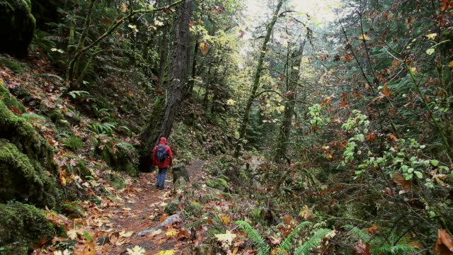 pov of man in red rain jacket on hiking trail in lush moss covered green forest with autumn colored leaves and ferns everywhere. - copertura di alberi video stock e b–roll