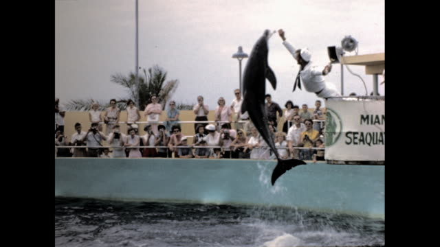 "man in sailor uniform blowing a conch, making the dolphin jump out of the water while the crowd cheers; sign ""miami seaquarium"" - stunt stock videos & royalty-free footage"