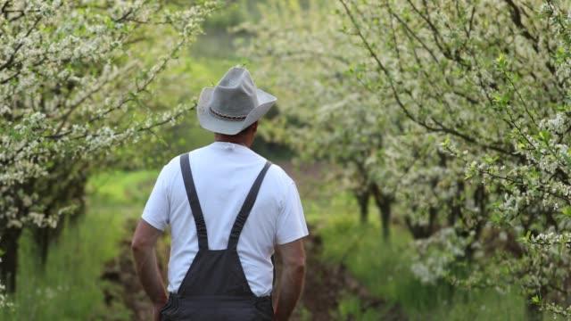 mann im obstgarten - pflaume stock-videos und b-roll-filmmaterial
