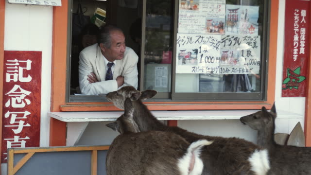 ms man in ticket booth and three deer peeking into booth, itsukushima shrine, miyajima island, japan - ticket counter stock videos & royalty-free footage