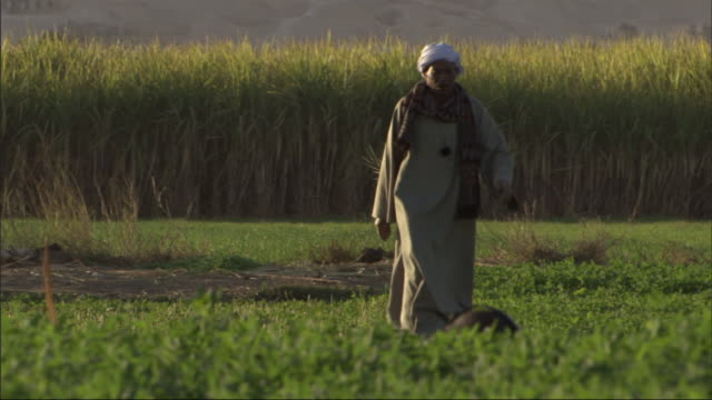 a man in traditional clothing walks through a field where workers labor. - middle east stock videos & royalty-free footage