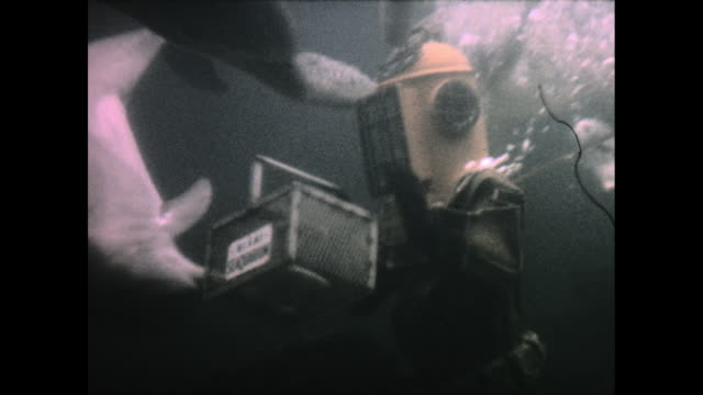 man in underwater diving suit in the water holding a box of food, surrounded by dolphins and sea turtles - sea turtle stock videos & royalty-free footage