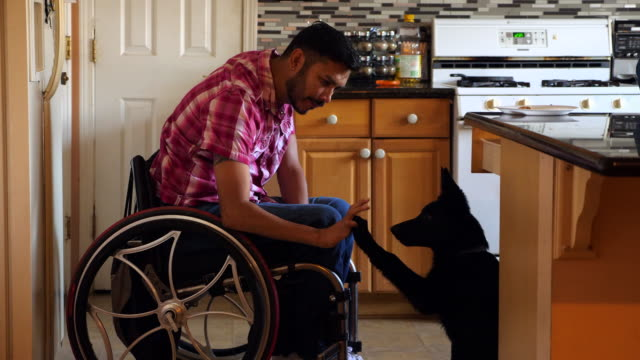 vídeos de stock e filmes b-roll de ms man in wheelchair training dog in kitchen of home - support