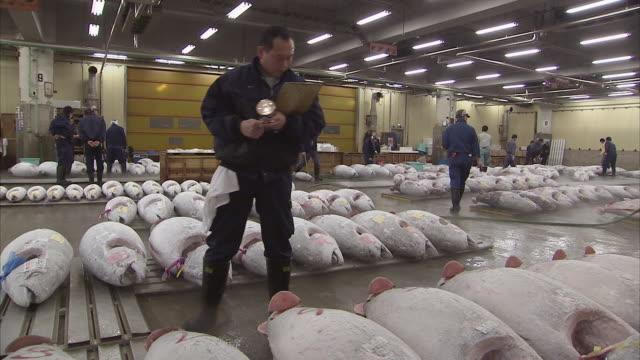 ws man inspecting frozen tuna fish, tsukiji fish market, tokyo, japan - fishing industry stock videos & royalty-free footage