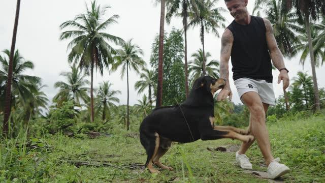 stockvideo's en b-roll-footage met de mens speelt met een hond - alleen één mid volwassen man