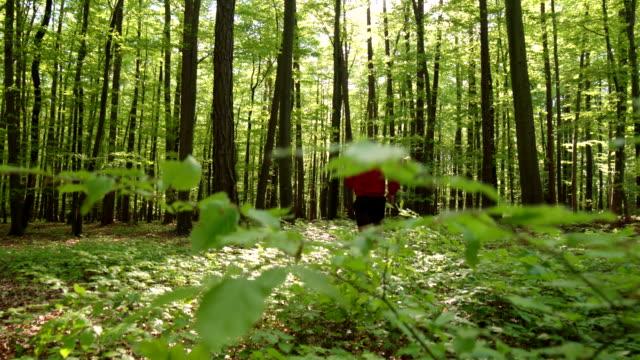 hd crane: mann joggen im green forest - baumgruppe stock-videos und b-roll-filmmaterial